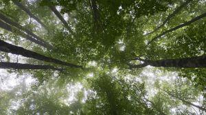 La restauración de bosques perdidos eliminaría dos tercios del carbono del planeta