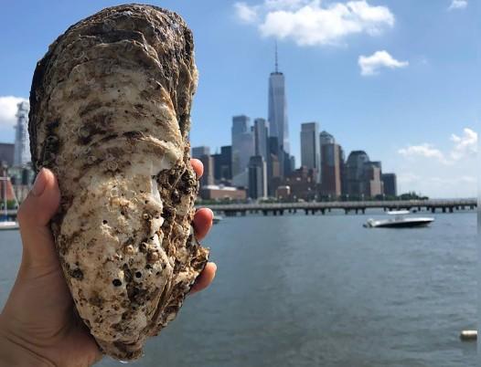 Reportan ostra gigante de más de medio kilo en el río Hudson