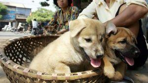 Por qué la capital de Vietnam pide a sus habitantes que dejen de comer carne de perro