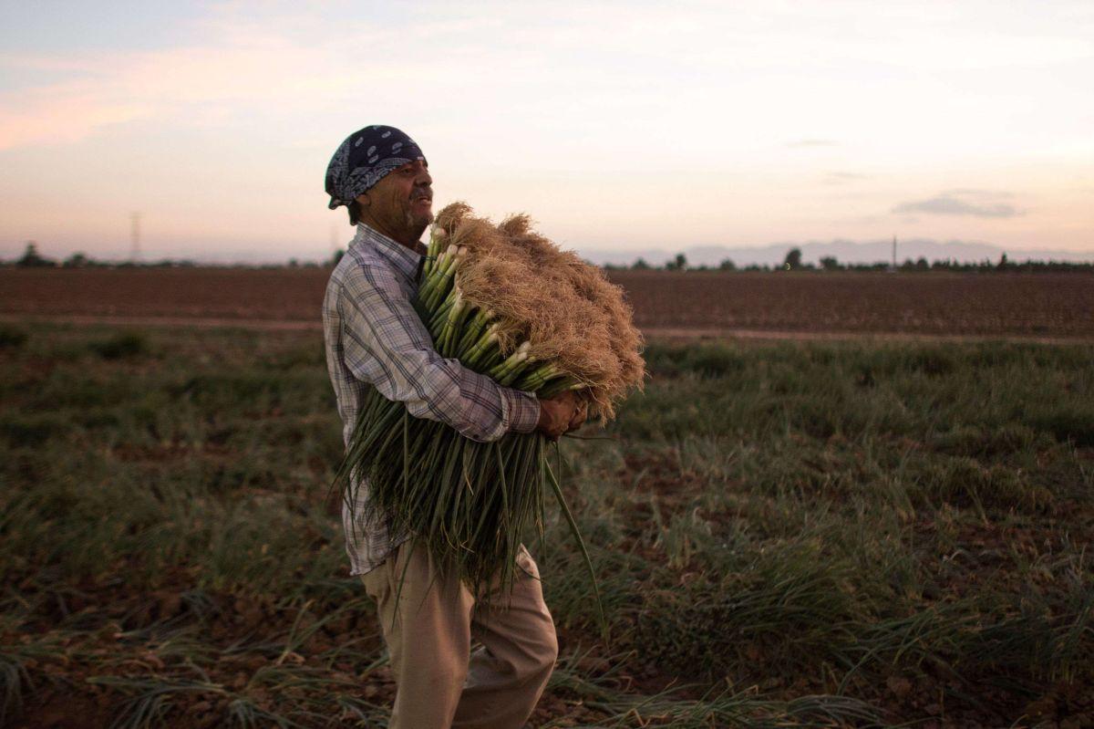 Agricultura en México, la más estable del TLCAN