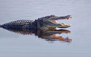 Un bebé y su madre son devorados por cocodrilo