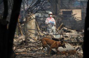 Más de mil desaparecidos y 74 muertos en los incendios en California