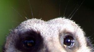 """Un hombre roba un pequeño animal del zoológico, dice que se """"enamoró"""" de él"""