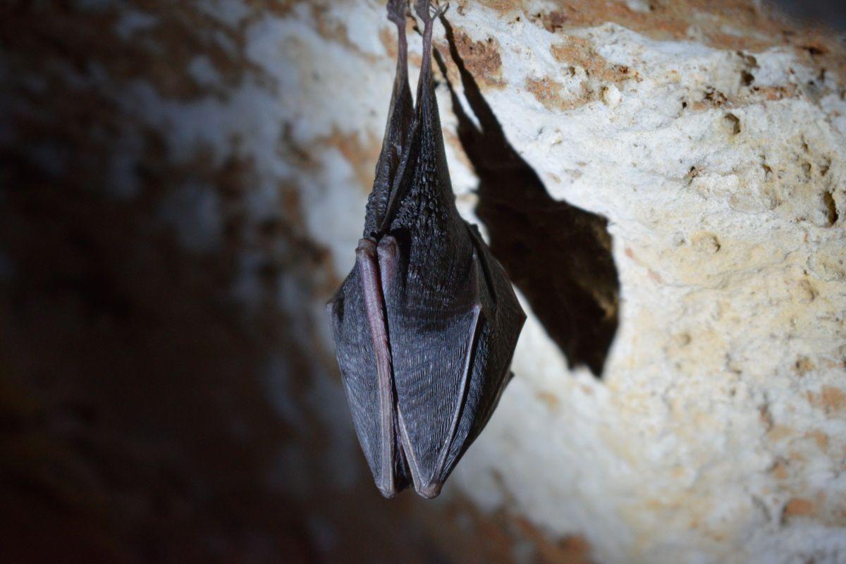 En NYC viven varias especies de murciélagos.