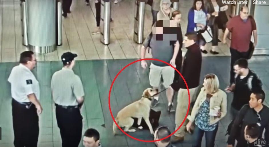 Perro detecta 'mochila sospechosa' en Ferry de Staten Island y Policía actúa con lentitud