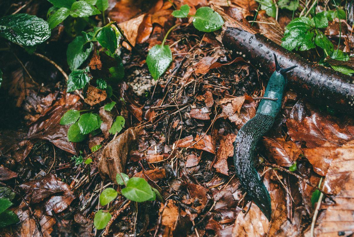 Los insectos de jardín pueden estar contaminados con parásitos.