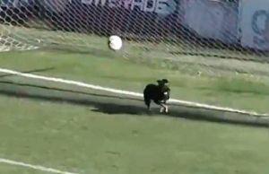 Un perrito impide un gol en Argentina ¿Fue o no fue? ¿Qué se marcó?