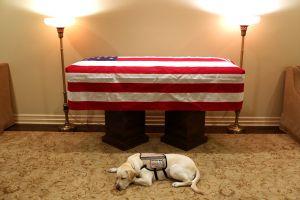 Ternura: Perro de servicio de George H.W. Bush acompaña el féretro del expresidente