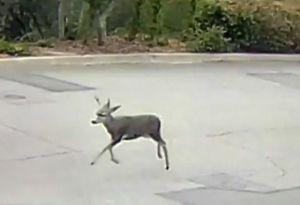 Condenado a ver Bambi cada día, la ridícula sentencia de un juez que causa polémica
