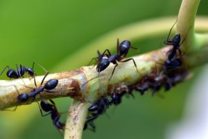 Hormigas salvan a joven de ser violada