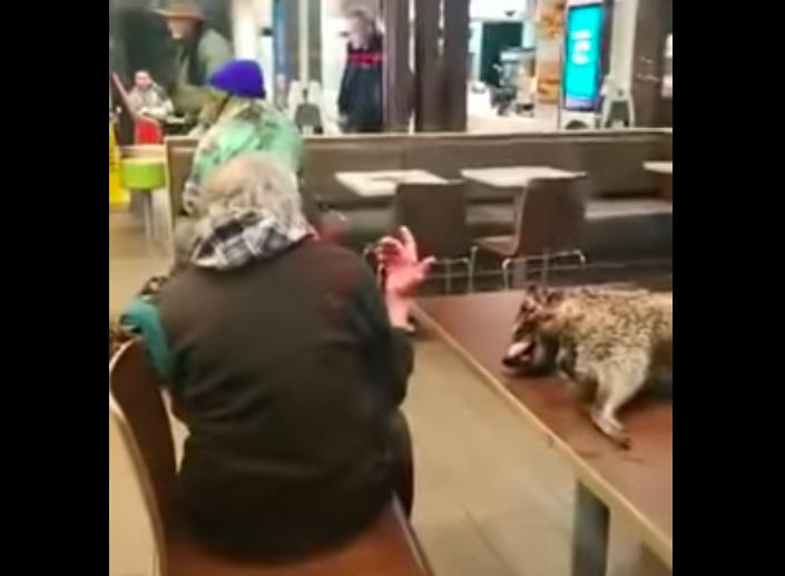 Hombre lleva un mapache muerto y ensangrentado a McDonald's de San Francisco