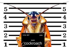 Puedes vengarte de tu ex poniéndole su nombre a una cucaracha