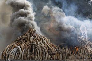 Cazadores furtivos en Kenia podrán ser ejecutados por matar especies en peligro