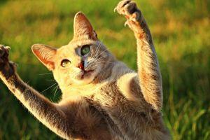 ¿Te rasguñó un gato? ¡Cuidado! Podrías sufrir de disfunción eréctil