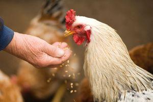 Cheng Lili, el multimillonario que hizo su fortuna criando pollos