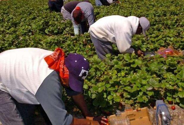 El campo no es lugar de trabajo para jóvenes