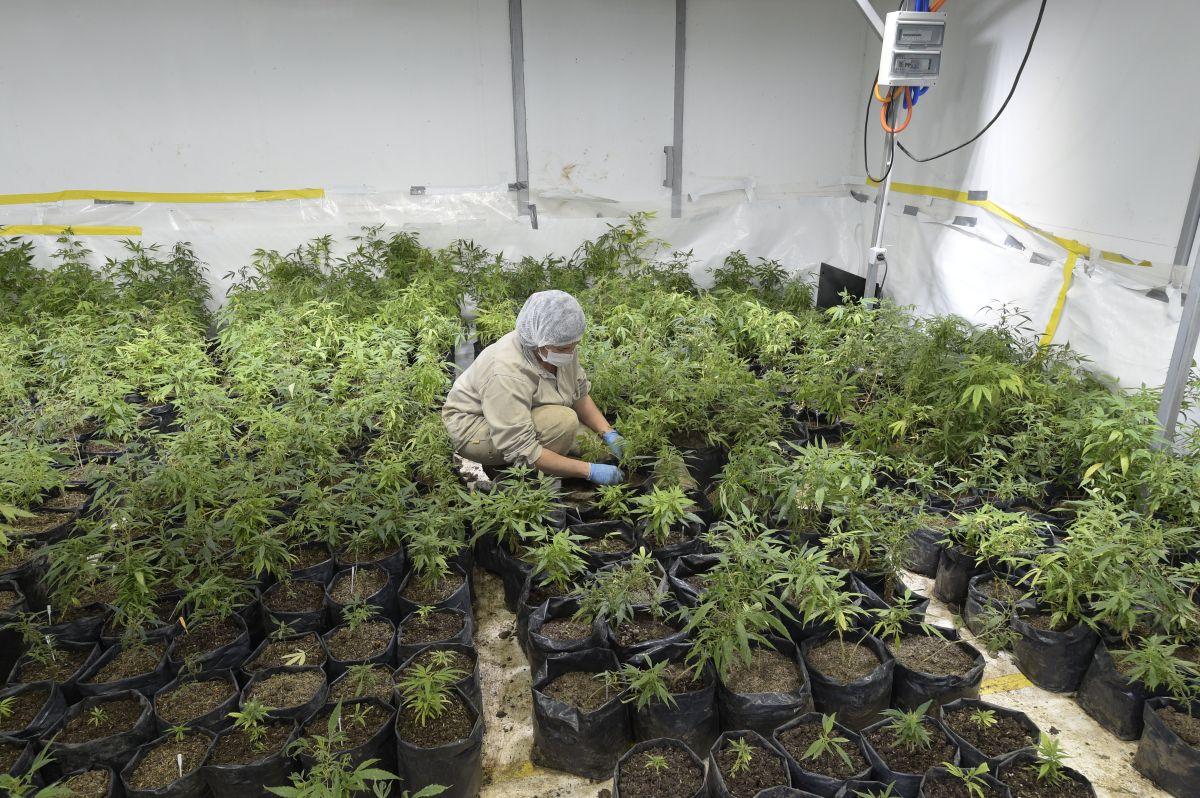 Las negociaciones para legalizar la comercialización de la marihuana ya llevaban varios años en Nueva York.