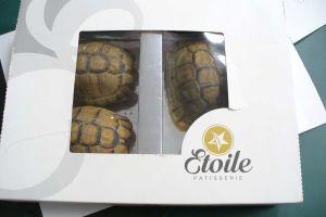 Intenta pasar tortugas como si fueran pasteles por el control de aduanas