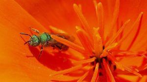 Encuentran 4 abejas vivas en el ojo de una mujer