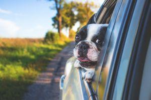 """""""Dog Mode"""": Conoce la nueva función del Tesla Model 3 que cuida la temperatura del auto cuando dejas a tu mascota"""