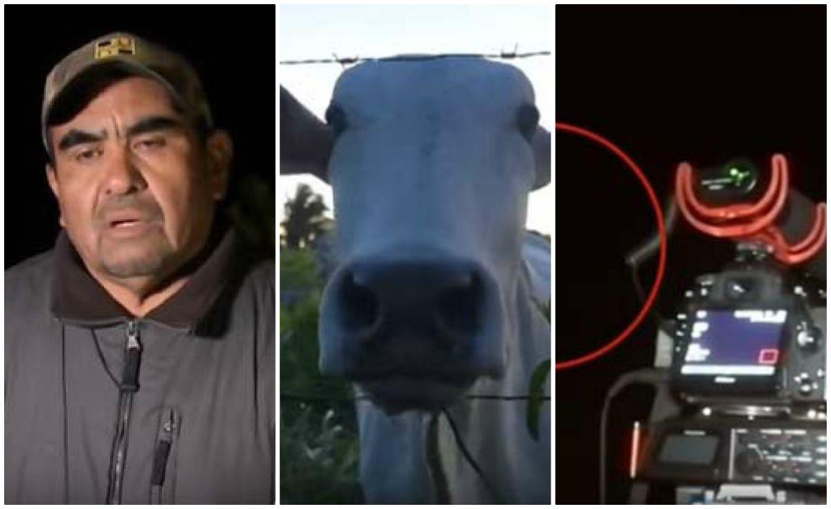Granjero en Bolivia asegura que extraterrestres lo visitan y hasta mutilan su ganado