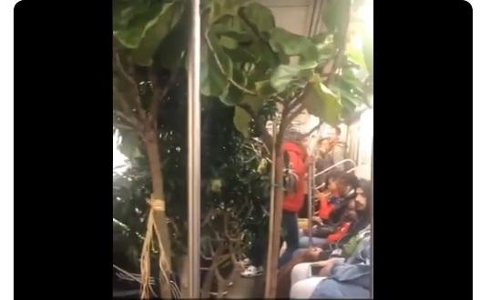 Insólito retraso en el Metro de Nueva York por pasajero trasladando un jardín tropical