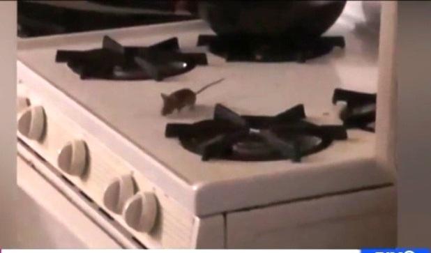 Ratas invaden estufas de apartamento NYCHA con tres niños en Brooklyn