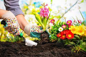Hacer labor de jardinería tiene los mismos beneficios que ir al gimnasio