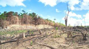 """4 gráficos que muestran la """"alarmante"""" degradación de la biodiversidad del planeta"""