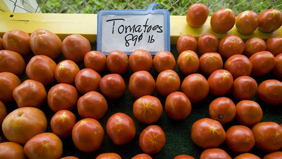 """Aranceles al tomate mexicano: 4 efectos de la """"guerra del tomate"""" entre México y Estados Unidos"""
