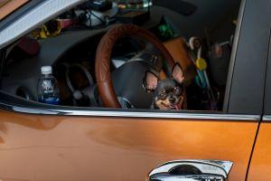 ¿Mascotas en el auto? Esta es la mejor manera de mantenerlo limpio