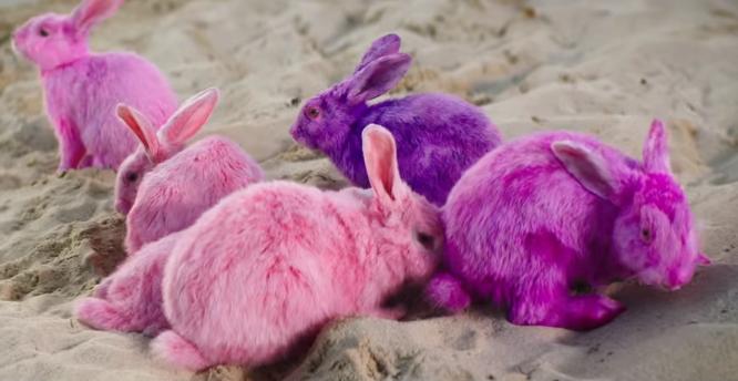 """Los conejos en video del """"Conejo malo"""" Bad Bunny provocan debate sobre maltrato animal"""