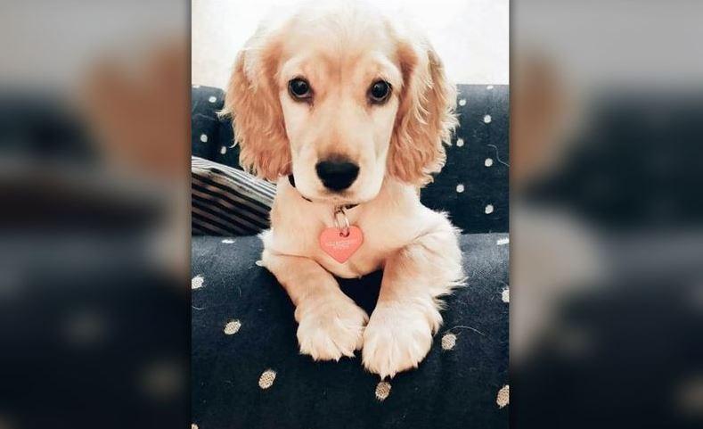 Cachorrita perdida en las vías del metro fue encontrada sin vida