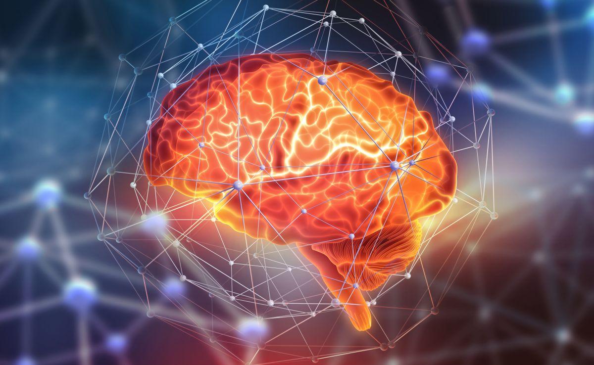 ¿Hasta cuándo aprende el cerebro?