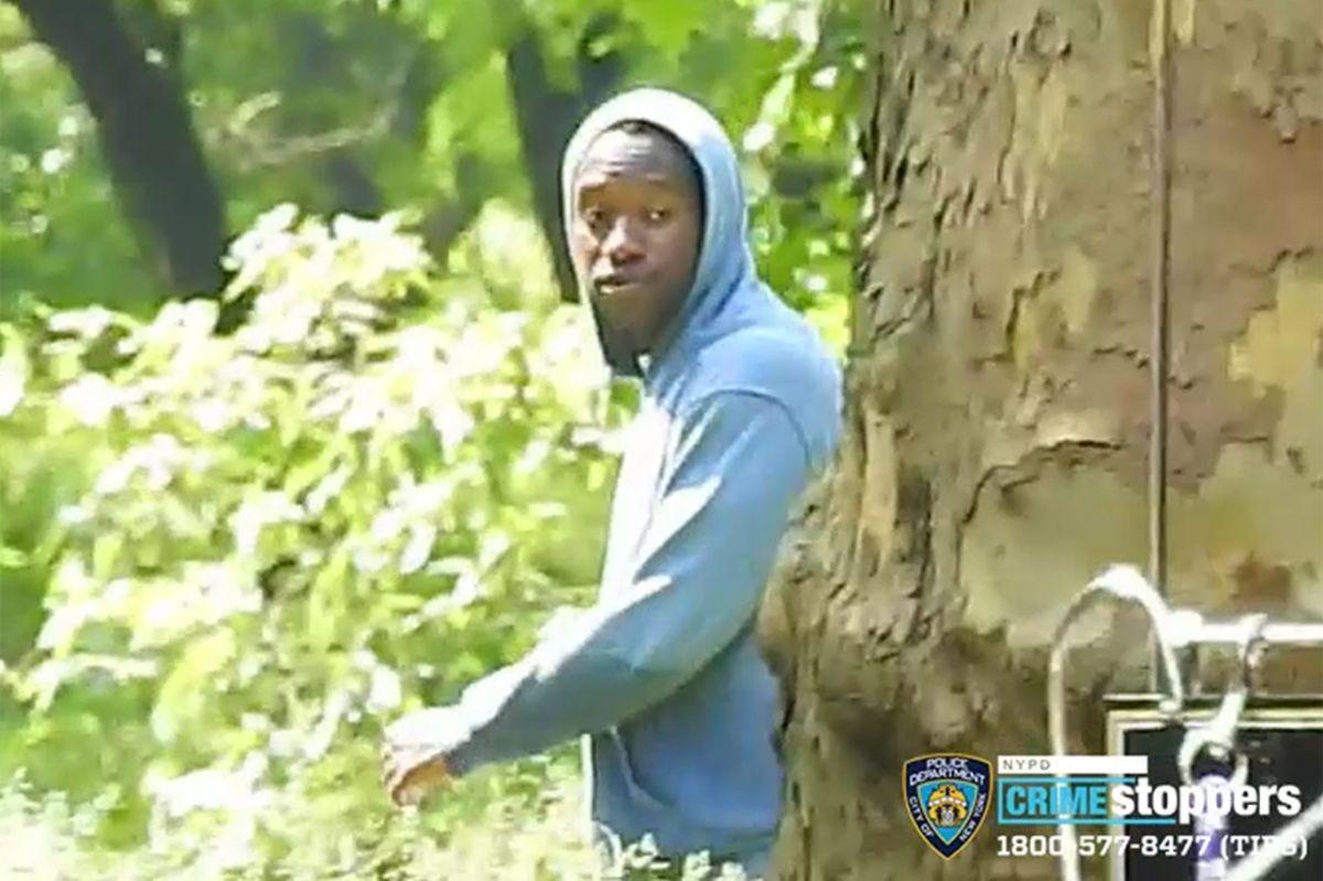 Golpearon y robaron a anciano mientras leía un libro en Central Park