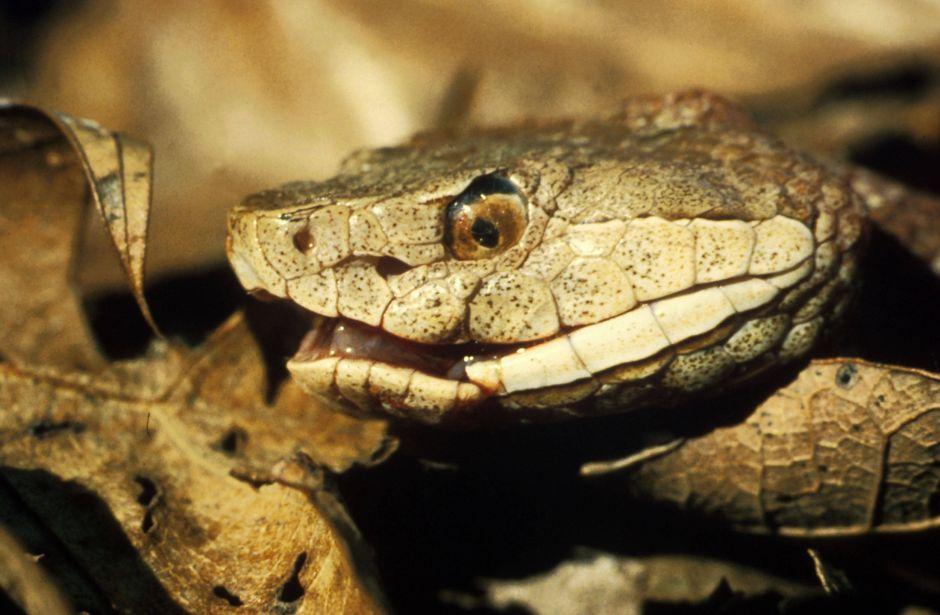 Serpiente venenosa muerde a una mujer mientras lavaba ropa en sótano de la casa