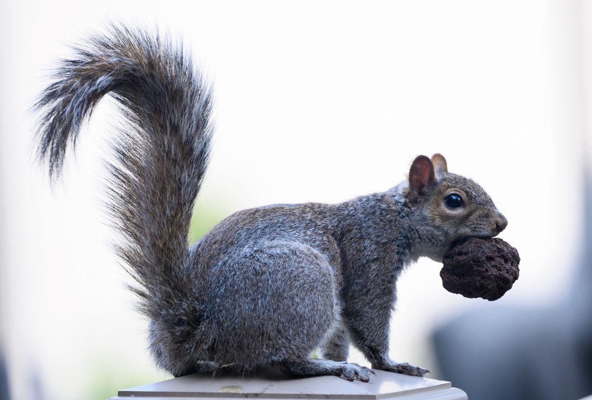 ¿Sabes cuántas ardillas hay en el Central Park?