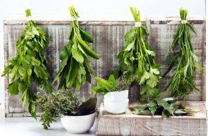 7 hierbas que ayudan a fortalecer el sistema inmunológico