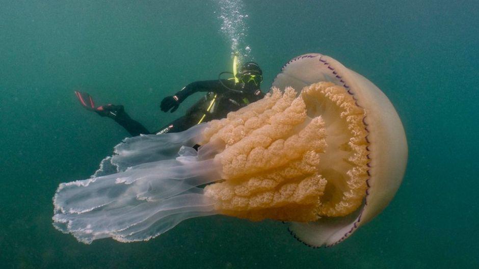 El sorprendente encuentro entre unos buzos y una medusa gigante