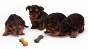 Estas marcas de alimentos para perros podrían enfermar del corazón a tus mascotas