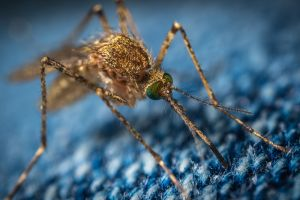 """""""¿Por qué los mosquitos me pican sólo a mí?"""" Te decimos cómo evitarlo"""
