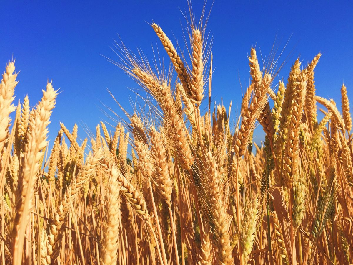 Aprende a preparar una dieta de plantas para pacientes con diálisis