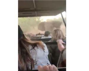 VIDEO: Elefante furioso ataca un auto lleno de turistas durante un safari