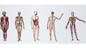 ¿Qué ocurre con los cuerpos que se donan a la ciencia?