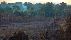 Incendios en el Amazonas: 5 datos que explican qué está en riesgo por los fuegos