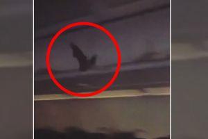 ¡Insólito! Pasajeros en pánico al descubrir un murciélago en avión en ruta a Nueva York