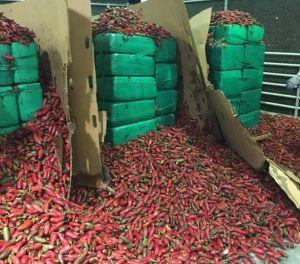 Incautan cerca de cuatro toneladas de marihuana camufladas en jalapeños en California