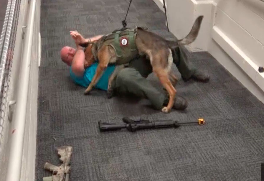 Veterano entrena perros para atacar a tiradores en escuelas