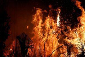 Pacto de Leticia: 7 países de Sudamérica se comprometen a proteger a la Amazonía