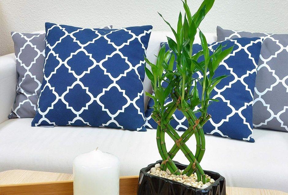 4 bambús de la suerte que puedes tener en tu hogar como un amuleto natural